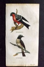 Brightly (Pub) 1815 Hand Col Bird Print. Bullfinch. Winchat